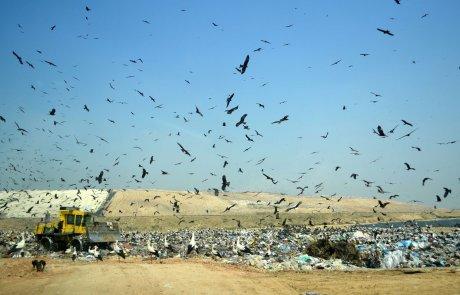 חבורת הזבל: בניו יורק ובקופנהגן מנסים להפוך את האשפה לנכס עירוני